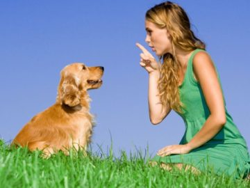 Cách dạy chó ngồi theo lệnh của mình 6
