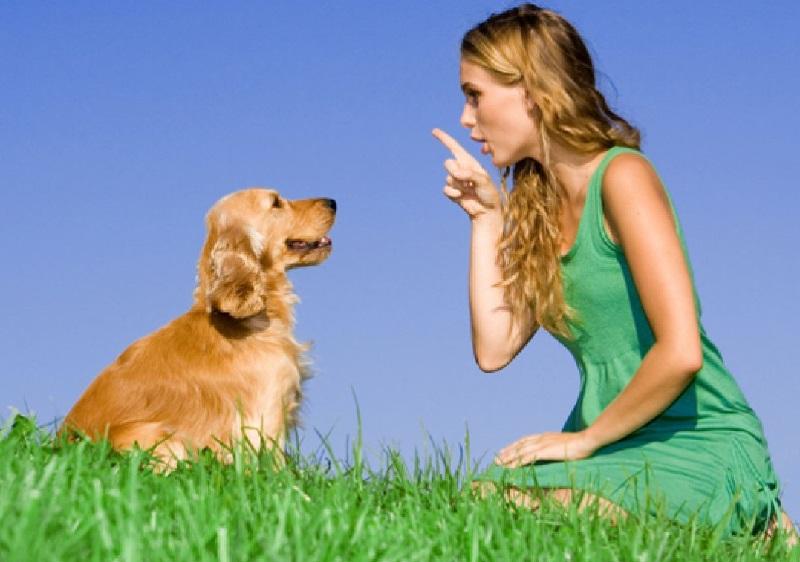 Cách dạy chó nằm xuống theo lệnh của mình 2