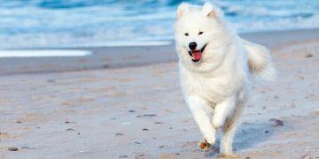 Phương pháp và kỹ năng huấn luyện chó cơ bản 16