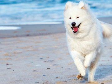 Phương pháp và kỹ năng huấn luyện chó cơ bản 3