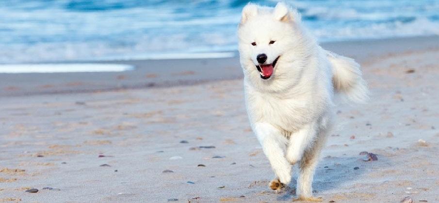 Phương pháp và kỹ năng huấn luyện chó cơ bản 2