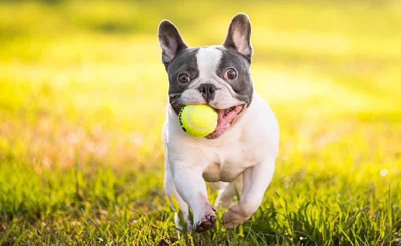 Cách huấn luyện chó hiệu quả như đặc nhiệm dạy chó nghiệp vụ 3