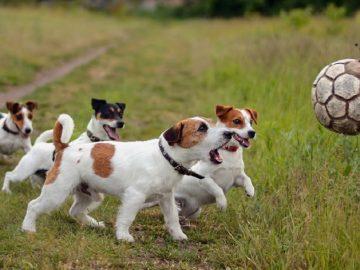 Cách huấn luyện chó hiệu quả như đặc nhiệm dạy chó nghiệp vụ 10