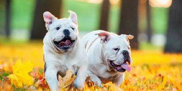 Tìm hiểu về đặc điểm, chu kỳ, cách giao phối của loài chó 12