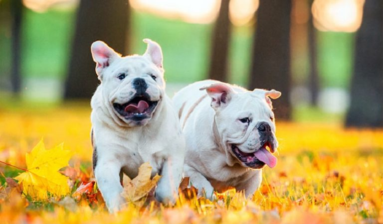 Tìm hiểu về đặc điểm, chu kỳ, cách giao phối của loài chó