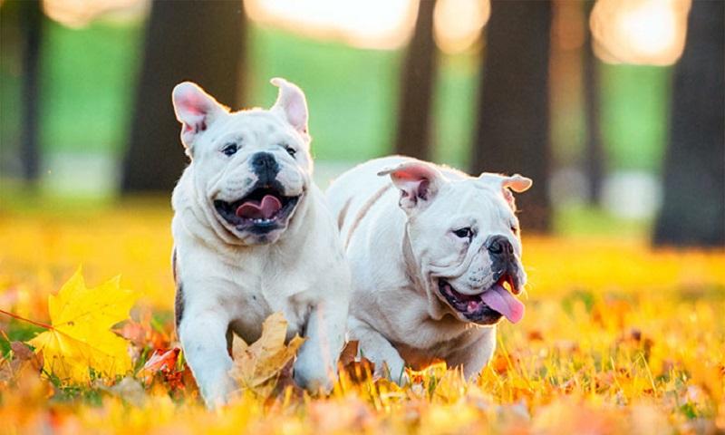 Cách chăm sóc chó mẹ và chó con mới sinh 2