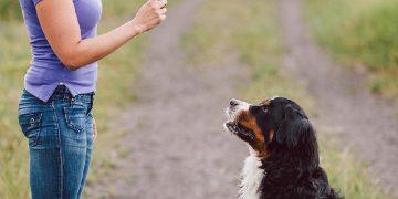 cách dạy chó luôn trung thành và nghe lời mình 17
