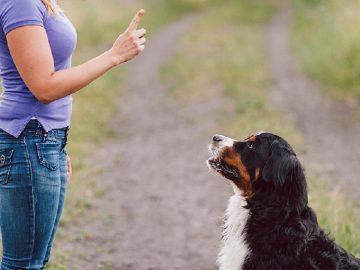 cách dạy chó luôn trung thành và nghe lời mình 10