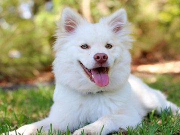 Kinh nghiệm nuôi chó và phối giống chó chính xác nhất 1