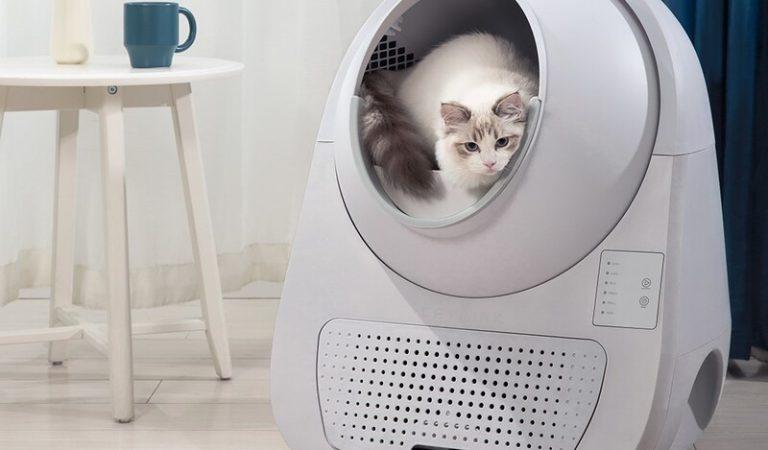 Top 10 mẫu nhà vệ sinh cho mèo tốt và bán chạy hiện nay