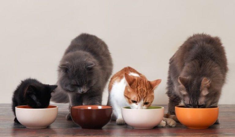 Review 12 thương hiệu pate cho mèo tốt nhất 2021