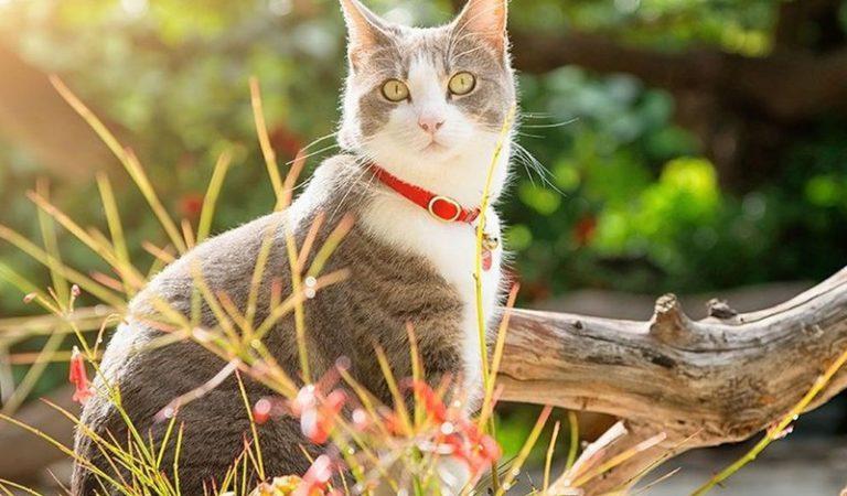 Top 9 vòng cổ chống rận cho mèo hiệu quả nhất hiện nay