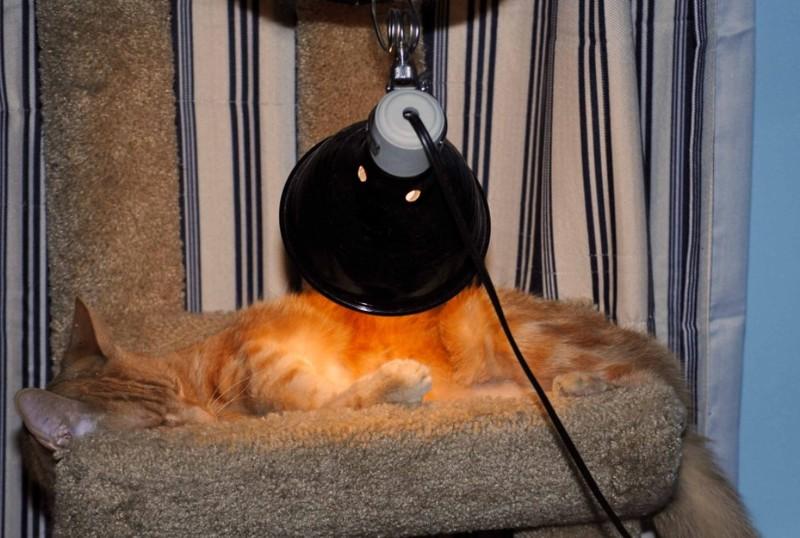 đèn sưởi ấm cho chó mèo
