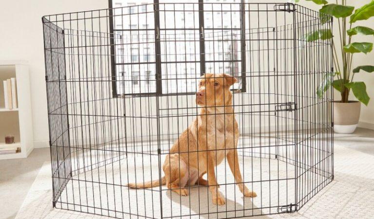 Top 4 hàng rào quây cho cho chó bền đẹp, giá rẻ 2021
