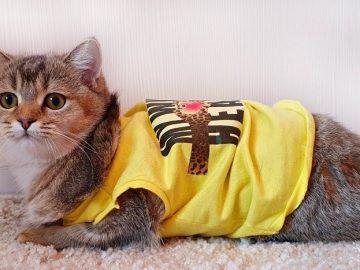 Top 10 mẫu quần áo cho mèo đẹp và dễ thương nhất 1