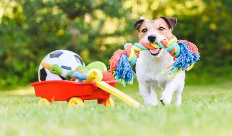 Top 10 đồ chơi cho chó cần thiết và đáng mua nhất 2021