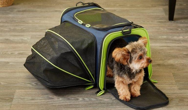 Top 7 túi vận chuyển chó mèo đẹp và hot nhất 2021
